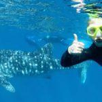 Tambah Pengalaman Berenang di Lautan Bersama Hiu Paus. Berani Coba?