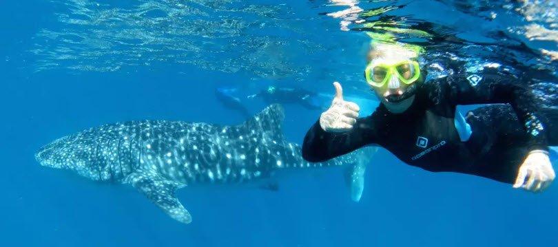 berenang bersama hiu paus