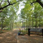 Tebet Juga Punya Taman Kota yang Menarik, Loh!